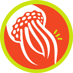 รูปแมงกะพรุน (Jellyfish)