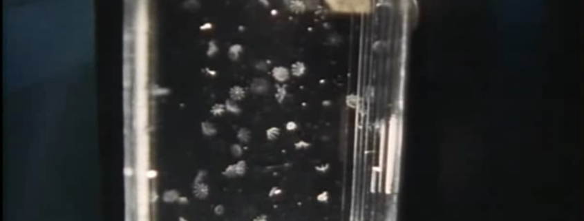 Jellyfish Experiment by NASA STS-40
